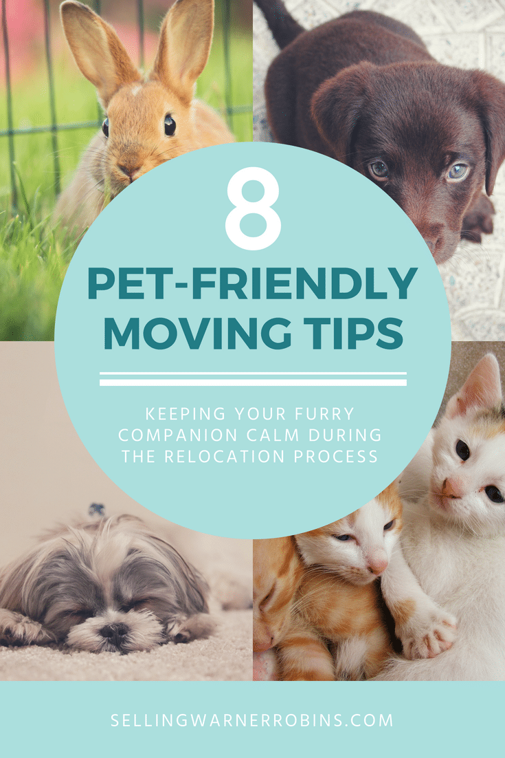 Pet friendly moving tips