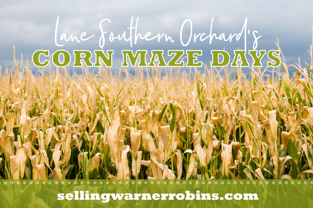 Corn Maze Days at Lane Southern Orchards