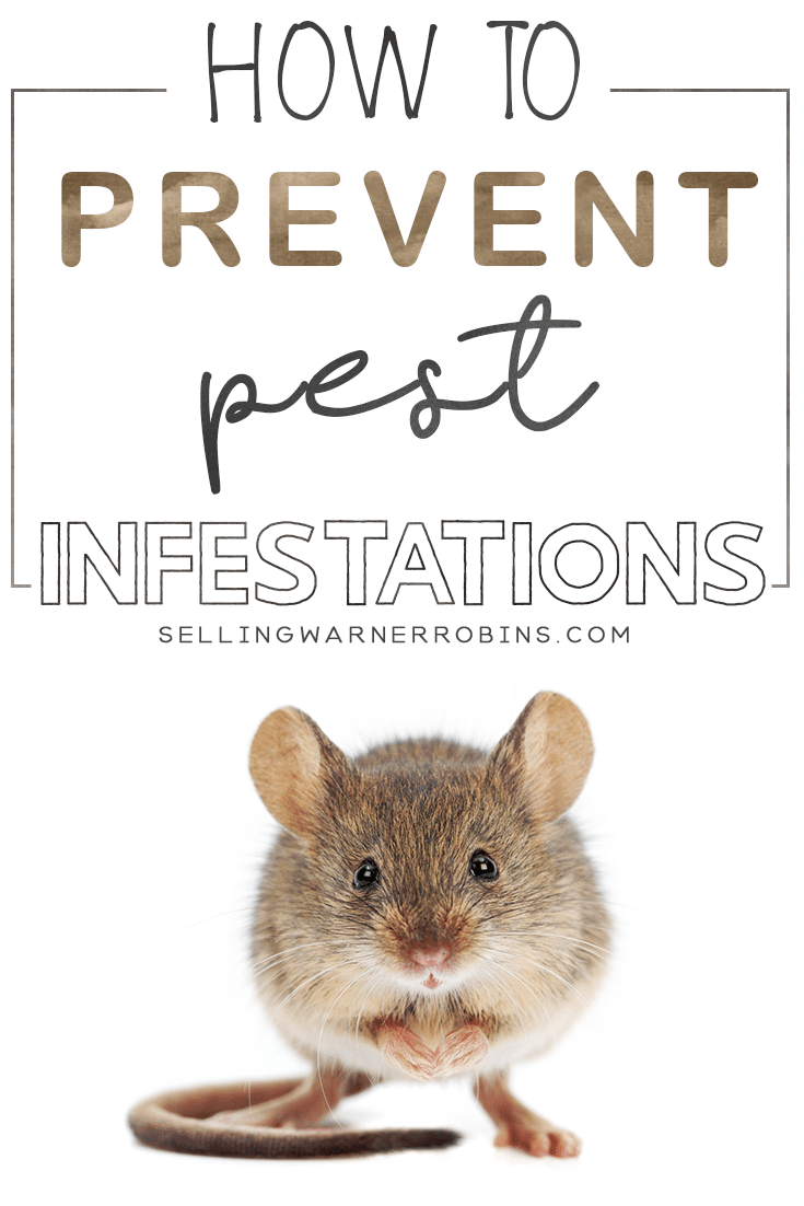 How to Prevent Home Infestations