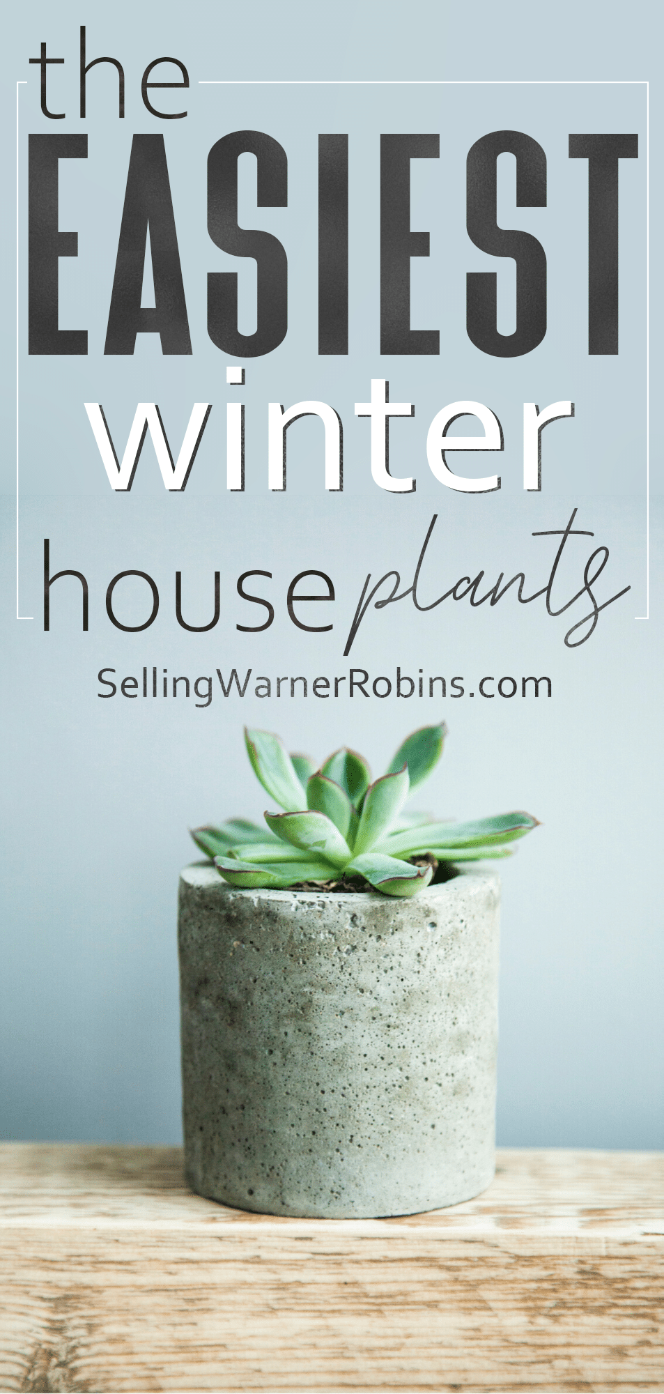 Decorating with house plants is a great way to bring the outdoors inside during the winter. Take a look at the easiest house plants to care for to help get you started! #realestate #houseplants #houseplantsindoor #plantdecor
